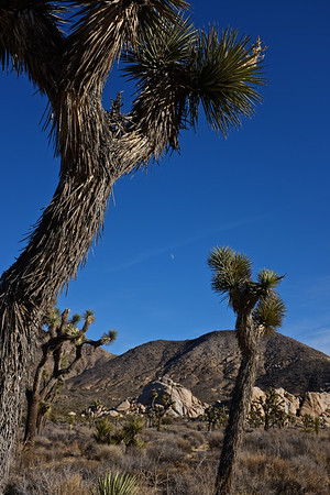 Joshua Tree NP and Wonder Valley