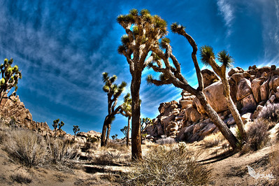 Joshua Tree - Connecting out in the Desert - February 2013