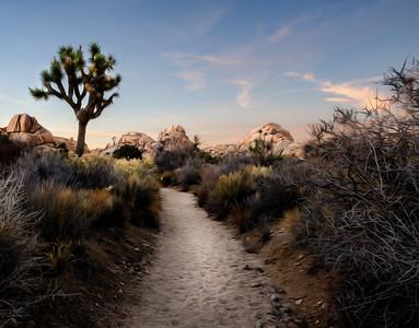 Joshua Tree,Joshua Tree National Park, Oil, lone trail,