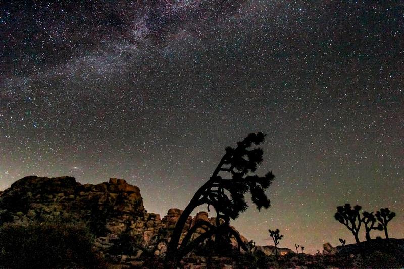 Starry Night in Joshua Tree National Park