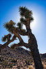Joshua Tree National Park :
