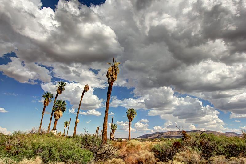 Palms at Joshua Tree National Park