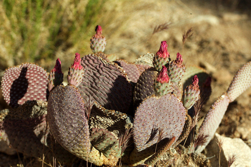 Blooming cactus.