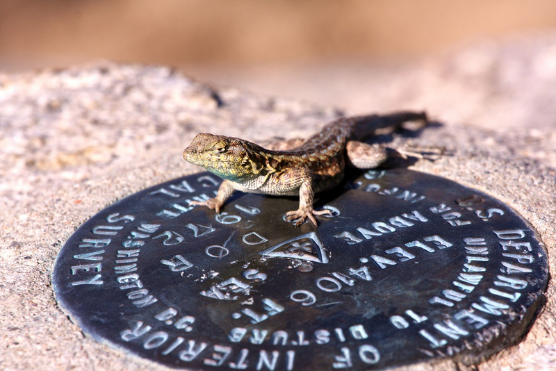 our little friend.