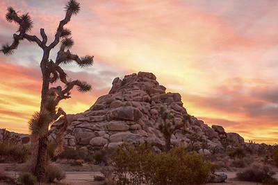 Joshua Tree California, October 2015.  Photo by Weldon Weaver.
