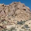 on Mastodon Peak