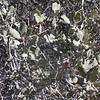 Sonora Scrub Oak (Quercus turbinella)