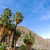 Fan Palms at the 49 Palms Oasis. No, we didn't count them. Many of the trunks are blackened from a recent fire.