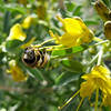 Bee on a flower at the 49 Palms Oasis