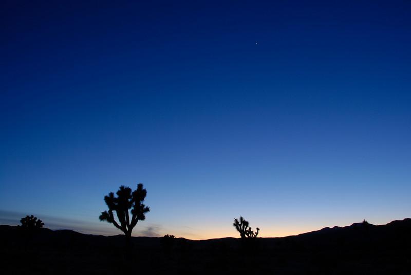 Joshua trees and Venus at dusk