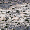Patch of rocks near Ryan Mountain