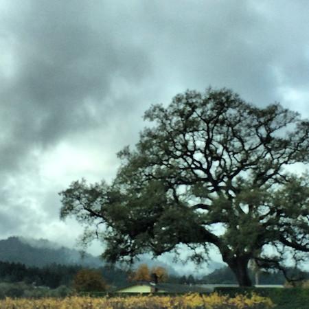 Dry Creek, Sonoma