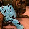 Fargus wearing a robe