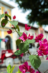 Flowers around the Square in Granada.