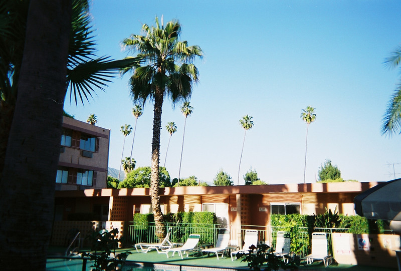 "<a href=""http://www.thesagamotorhotel.com/"">The Saga Motor Hotel</a> has palm trees with a  view of more palm trees."