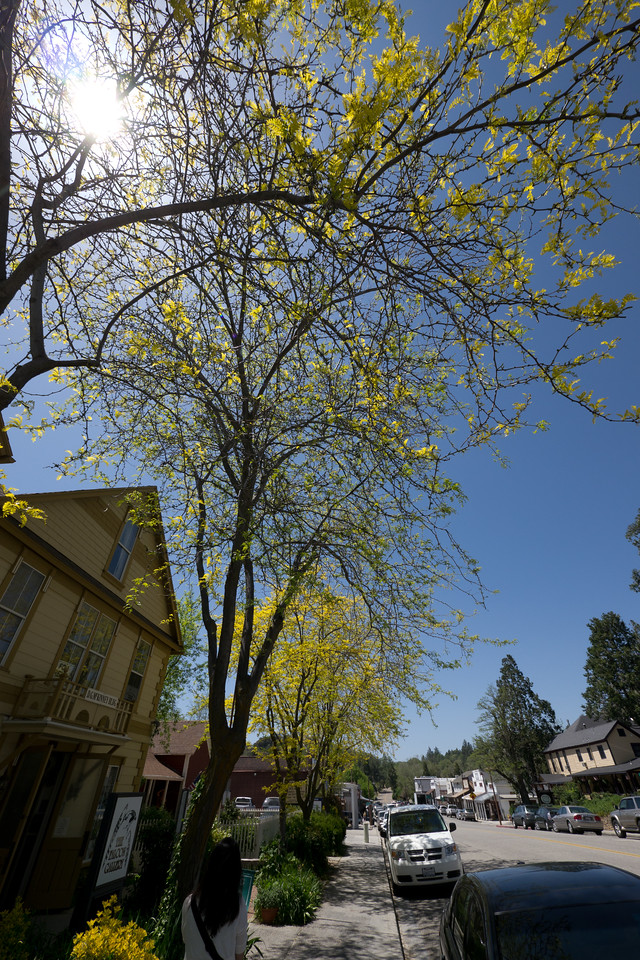 Trees with yellow leaves - shot @ ISO 160, f/8.0, 1/500 sec, on Panasonic DMC-GH2 w/ LUMIX G VARIO 7-14/F4 lens at 7 mm