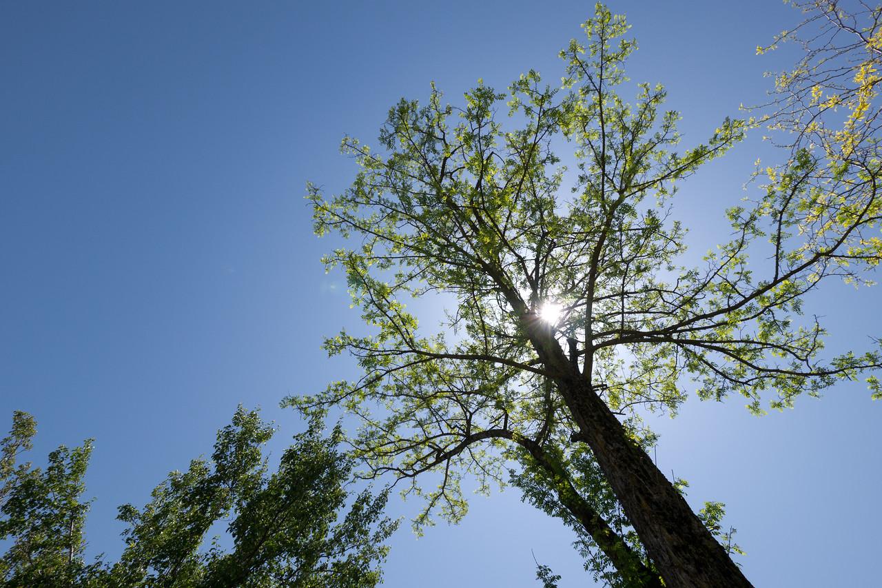 Trees with yellow leaves - shot @ ISO 160, f/8.0, 1/400 sec, on Panasonic DMC-GH2 w/ LUMIX G VARIO 7-14/F4 lens at 7 mm