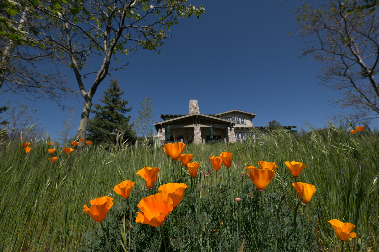Orange poppies in front of the Orchard Hill Inn. - shot @ ISO 320, f/5.6, 1/2500 sec, on Panasonic DMC-GH2 w/ LUMIX G VARIO 7-14/F4 lens at 7 mm