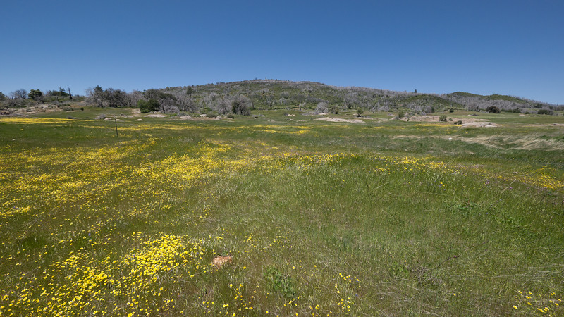 A meadow of flowers off the west side of the 79 between Sunrise Hwy and Lake Cuyamaca.  North Peak is in the background. - shot @ ISO 320, f/5.6, 1/1600 sec, on Panasonic DMC-GH2 w/ LUMIX G VARIO 7-14/F4 lens at 7 mm