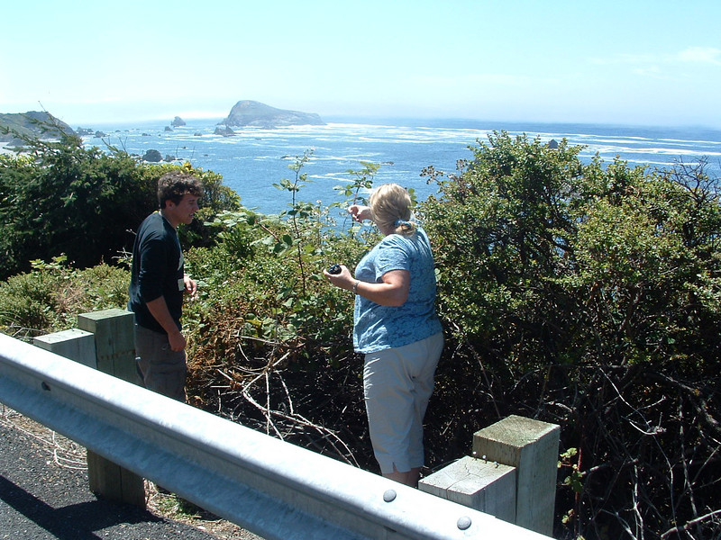 The Oregon coast is covered with blackberries!