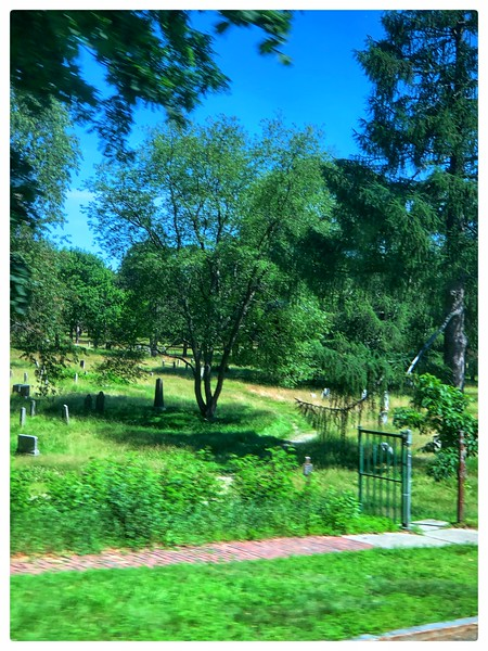 old cemetery, no mowing to protect the gravestones