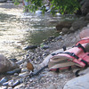 Robin and a life vest on the shore at my campsite.