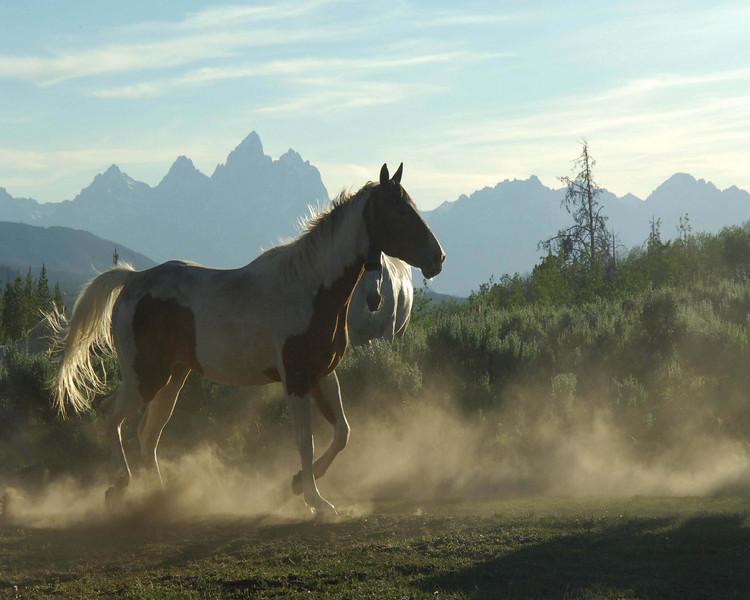 horsecolorprint