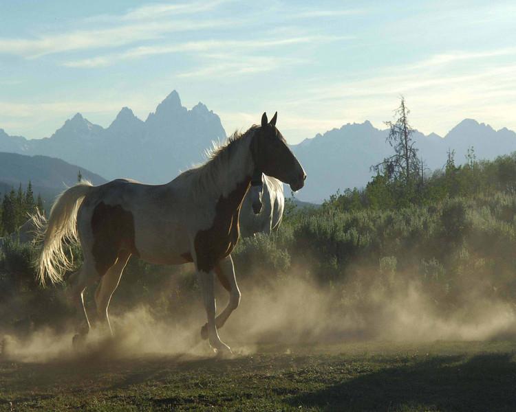 horsecolorprintparade