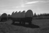 covered wagon bw