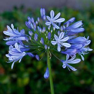 5642 Flower
