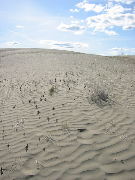 Juniper Dunes National Wildlife Refuge
