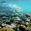 Underwater reel life