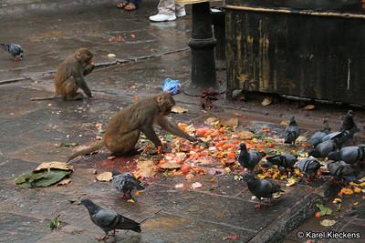 KPB_015_Swayambhunath