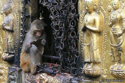KPB_016_Swayambhunath