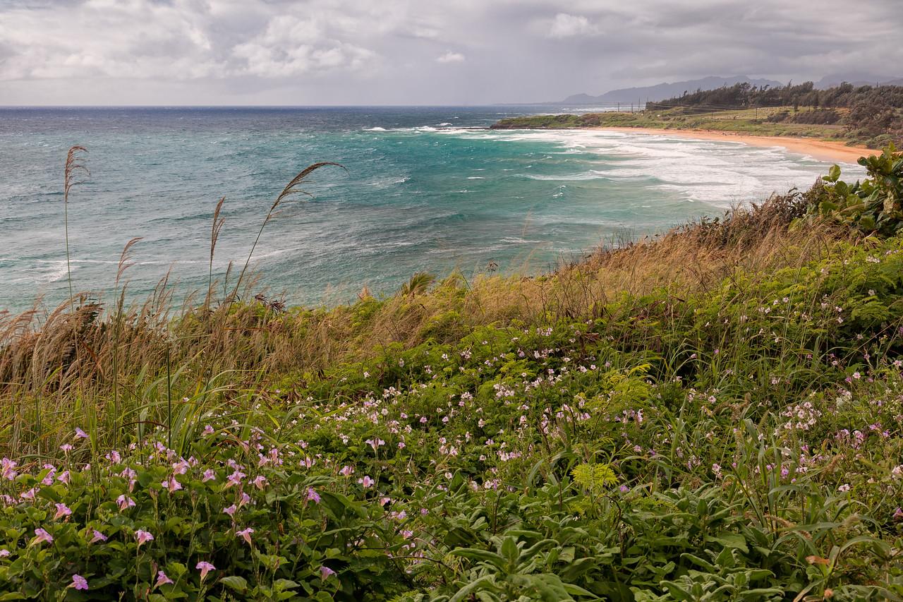 DONKEY BEACH