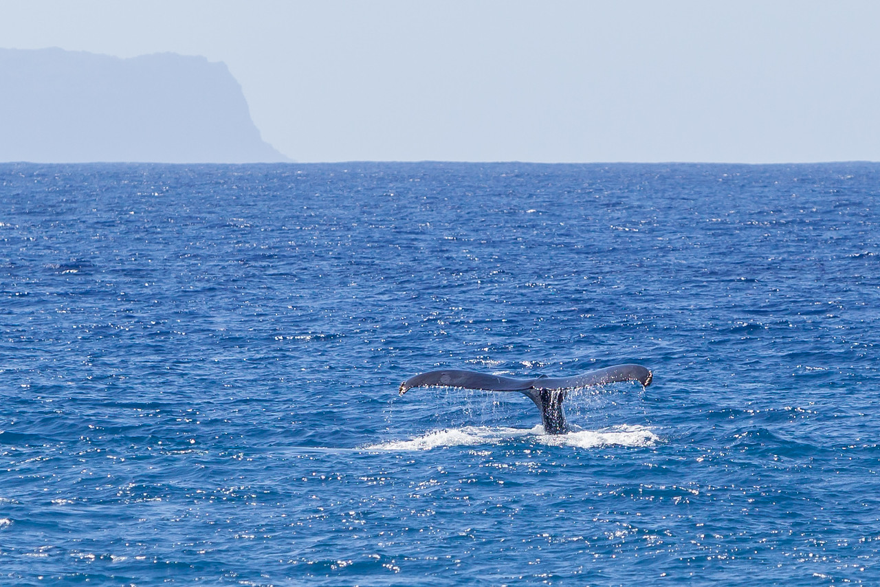 """WHALE TAIL """"SIGHTING"""""""