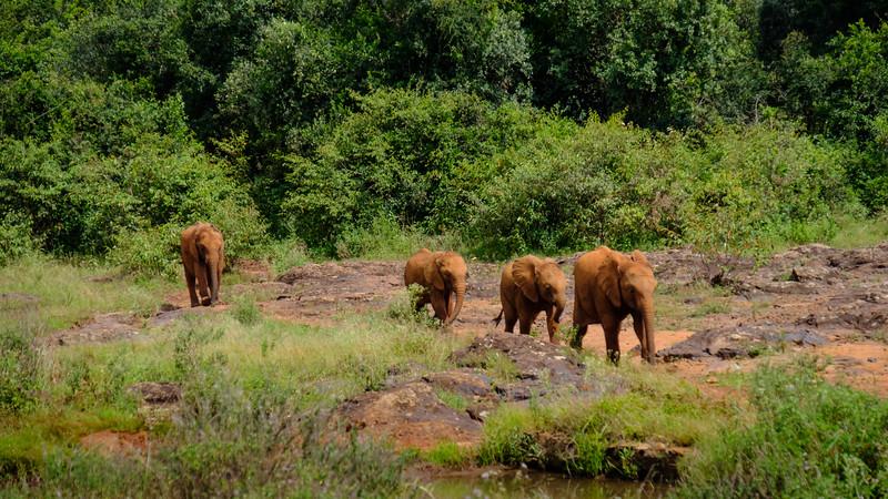 ORPHAN ELEPHANT SANCTUARY