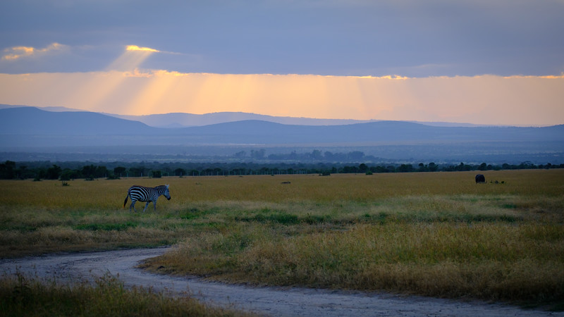 BEAUTIFUL LATE AFTERNOON LIGHT BATHES THE GRASSLANDS OF THE OL PAJETA CONSERVANCY
