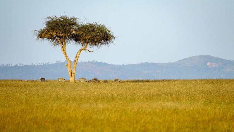 RHINO CEMETERY UNDER LONE ACACIA TREE