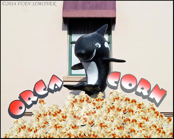 """""""ORCA POPCORN"""",Ketchikan,Alaska,USA."""