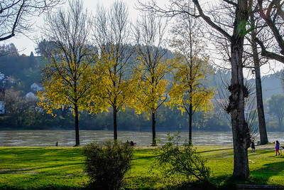 Fall foliage lines the Inn River mere yards from its confluence with the Danube.