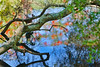 Reflections in the Pond - Kanapaha Botanical Gardens, Gainesville Florida - Photo by Pat Bonish