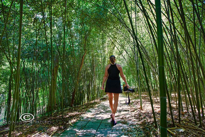 Waltzing through a canopy of Bamboo - Kanapaha Botanical Gardens, Gainesville Florida - Photo by Pat Bonish