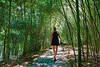 Waltzing through a canopy of Bamboo - Kanapaha Botanical Gardens, Gainesville Florida - Photo by Pat Bonish