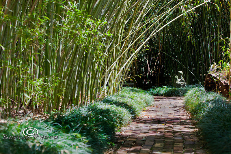 Buddha in the Bamboo Garden - Kanapaha Botanical Gardens, Gainesville Florida - Photo by Pat Bonish