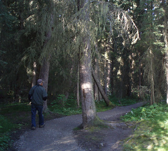 Fenland birding trail just outside town of Banff.