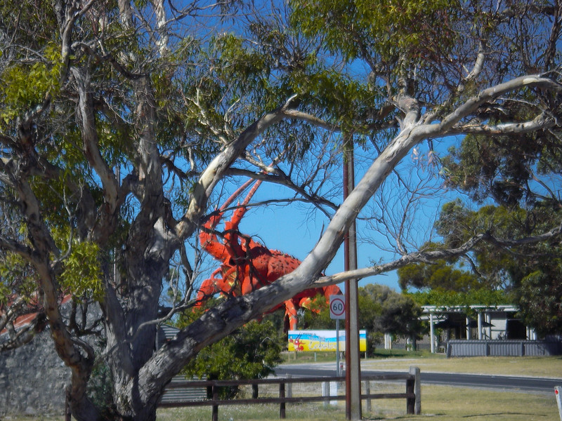 The Big Lobster. Kingston, SA.