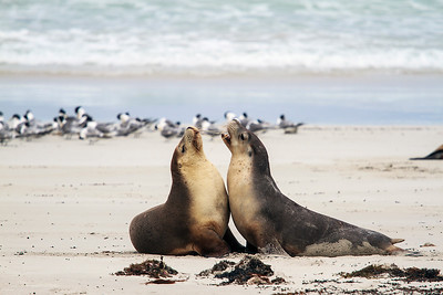 Kangaroo Island & South Australia