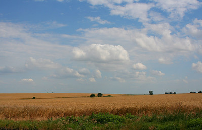 Wheatfields a few miles  northwest of Lincoln, Kansas.