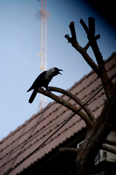 Ubiquitous crows, Karachi, Pakistan<br /> scenes of daily life in markets and bazaars in Karachi<br /> (Credit Image: © Chris Kralik/KEYSTONE Press)